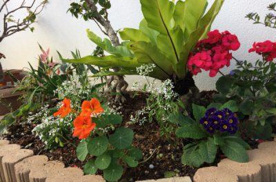 きれいな花畑をつくりました(●^o^●)