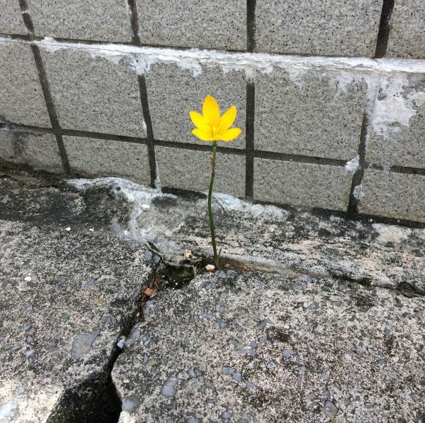 美しい一輪の花からの学び (*^-^*)